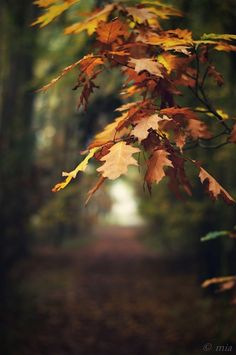 """where we walked beneath coppery boughs, spoke silent vows to nature's spirit."""" ~ M, September Still Life Autumn Day, Autumn Home, Autumn Leaves, Winter, Nature Spirits, Seasons Of The Year, Fall Harvest, Autumn Inspiration, Happy Fall"""