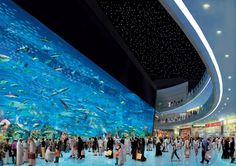 Dubai Mall Aquarium..... One of the largest tanks in the world!