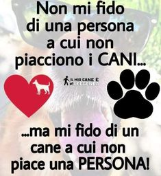 Amore mio, dolce . Intelligent Words, Cat Love, Dog Life, Animals Beautiful, Animals And Pets, Things To Think About, Dog Cat, Wisdom, Puppies