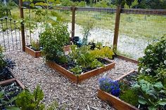 Start small, and focus on hardy plants via The Seasoned Homemaker