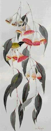 Australian Native Flowers, Australian Art, Australian Wildflowers, Plant Illustration, Botanical Illustration, Botanical Drawings, Botanical Prints, Watercolor Flowers, Watercolor Art