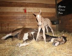 Mom and her newborn foal