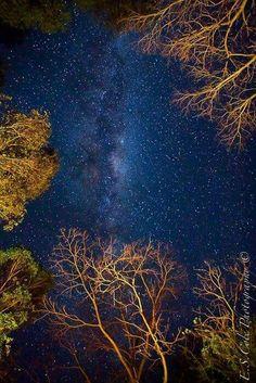 Tonight...the Milky Way