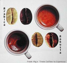 Arabica Coffee  * Ovale  * Curved line  * Brown after Brewing   * Acid Taste  [VERSUS]     Robusta Coffee  * round  * straight line  * darker after brewing  * Bitter Taste