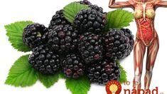 Mnohí ich majú v záhrade a vôbec nepoznajú tento zázračný účinok: Černice vás vyliečia a nemuste ich ani len jesť! Blackberry, Health And Beauty, Smoothie, Wellness, Fruit, Healthy, Food, Design, Health