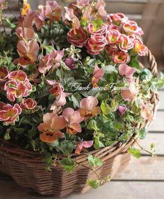 tef*tef*寄せ植え<BR>>2015 * no.11 *<BR><BR>スモーキーピンクの花かご | 寄せ植え | | Junk sweet Garden tef*tef* ガーデニング雑貨・花苗