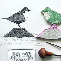 White-throated dipper - ilustración original hecha a mano de un pájaro, mano…