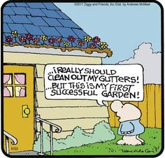 clean gutters - Ziggy