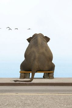Image from http://cdn.cutestpaw.com/wp-content/uploads/2013/08/l-Lonely-elephant.jpg.