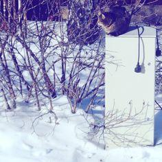 ...whoo! hoo!! ..up to single figures today! .. -8°C and sunny. 'Found a nice snow-free box to sunbath!! ☀😺🐾  .  .  #catitude #sunnyday #sun #sunshine #itscoldoutside #weareinfinland #thefinnishcat #mollycatfinland #lumi #snö #snow #gooutside #instacat #catsagram #caturday #coldweather #winter #猫 #katzen #katter #pets #catoftheday #grieg #catsofinstagram #cat #catlover #kissa #cute #finland #thisisfinland #weareinfinland