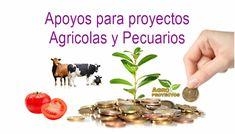 Apoyos para proyectos de Agricultura y Ganaderia
