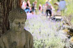 A welcomer to the Salt SpringIsland Lavender Festival Family Travel, Buddha, Lavender, Salt, Statue, Island, Adventure, Spring, Family Trips