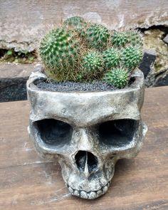 A preferida  [Modelo vaso/cinzeiro com planta] . #iscool #skull #caveira #caveiras #coisasdecaveira #handmade #caveirismo #instaskull #curitibacool #curitiba #cwb  #curitibahandmade #comprasonline #decoração #decor #curitibadecor #arte #art #gesso #cranio #calavera #suculenta #succulent #cactus #succulovers #succulentlove #amosuculentas #decoraçãodeinteriores by iscool.cwb