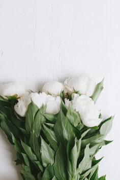 Peonies, white on a white background