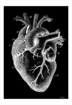 The Human Heart Art Print by mara_elizabeth Heart Anatomy, Anatomy Art, Heart Organ, Black Paper Drawing, Heart Artwork, Heart Illustration, Heart Painting, Anatomical Heart, Chalk Art