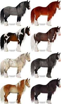 colorful drafts [CLOSED] by Kumoulogy on DeviantArt Cute Horses, Pretty Horses, Beautiful Horses, Animals Beautiful, Horse Coat Colors, Horse Markings, Horse Sketch, Horse Anatomy, Image Chat