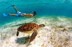 Swimming with sea turtles in the #Caribbean