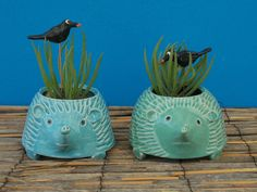 Hedgehog Planter, Succulents, Mint, Purple, Turquoise by CindySearles on Etsy