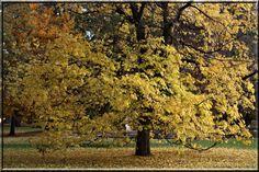 Baum in Hellbrunn