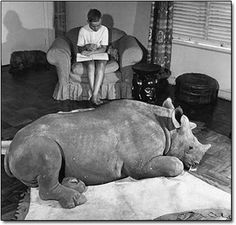 #ThrowbackThursday - Rupert the Rhino in his South African home. In 1960, Rupert was saved from a flood by a vet who then adopted him for a time.