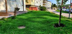 Solen glimtar in mellan träden på gräsmattan. Sidewalk, Side Walkway, Walkway, Walkways, Pavement