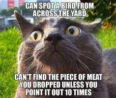 I have a cat like that, I love her very much but is missing some brains ;-))
