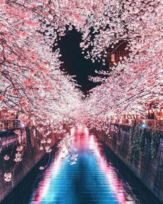 Explore wonderful places in Tokyo ▶️ lovely spring cherry blossom coming to an end here in Tokyo! Hope you all had a wonderful experience! Wonderful Places, Beautiful Places, Beautiful Pictures, Places In Tokyo, Places To Go, Cherry Blossom Japan, Japanese Cherry Blossoms, Japan Photo, Nature Wallpaper