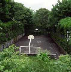 A basketball court overwhelmed by nature