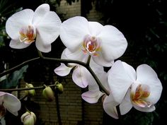 Beautiful Orchid Flowers For Everyone Horticulture, Bloom, Plants, Green Garden, Beautiful Orchids, Orchid Flower, Rose, Flowers, Nature