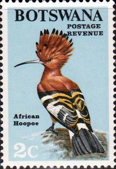 """Botsuana 1970 - La Abubilla (Upupa epops) es un colorido pájaro encontrado en toda Eurafrasia , notable por su distintiva """"corona"""" de plumas. Es la única  especie esxistente de la familia Upupidae."""