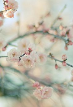 chasingrainbowsforever:Cherry Blossoms ~ By Mayu