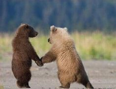 baby bears via Bonita Damico.  We are in this together!  Promise!