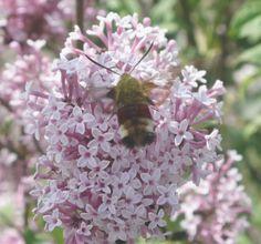 Semina piantine utili alla vita di api, farfalle e coccinelle on http://psicomamme.it
