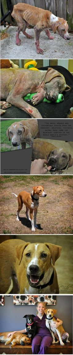RESCUED and now loved...look at the difference.