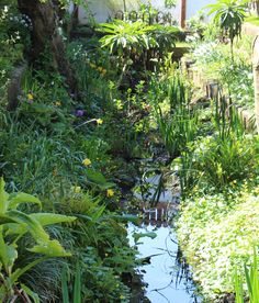 Water cottage garden by the seaside, Ireland vacation rental.