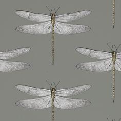 Discover the Harlequin Demoiselle Wallpaper - 111242 at Amara