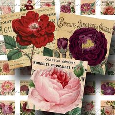 Roses on Vintage French Advertisements (1) Digital Collage Sheet - 1 Inch Square - Buy 3 sheets and get 4th FREE - Printable Download