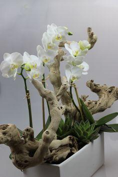 mini orchid exotic wood