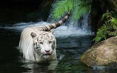 Experience with wildlife is a refreshment in life. Go for search your favorite wild life tour page S4 Wallpaper, Tiger Wallpaper, Animal Wallpaper, Nature Wallpaper, Wallpaper Ideas, Wildlife Wallpaper, 1920x1200 Wallpaper, Forest Wallpaper, Wallpaper Gallery