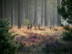 deer, forest, and nature image Half Elf, Nature Aesthetic, Land Scape, Mother Nature, Woodland, Beautiful Places, Simply Beautiful, Scenery, Wildlife
