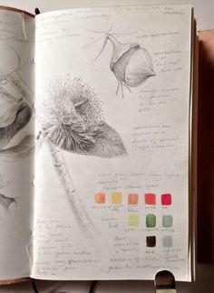 Dianne Sutherland Sketchbook