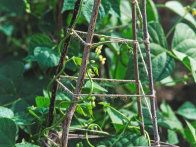 Gardening expert Gayla Trail offers advice on the best plants to trellis and how to create your own DIY plant supports.