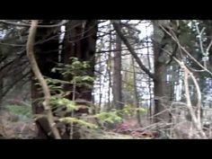 ▶ THE CANADIAN SHIELD - YouTube