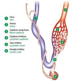 reseña histórica de sistema linfatico
