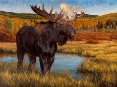 """""""King of the Marsh"""" 30 x 40 oil"""