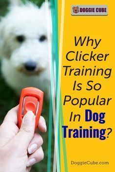 3 Ways to Stop Puppy Biting #dogtrainingcourse