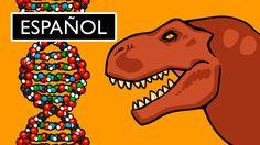 ¿Qué es el ADN y Cómo Funciona? Stated Clearly
