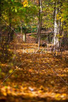 autumn trees. - Image of autumn trees.