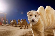 And the fluffiest little camel ever. | This Photographer And His Dogs Have Created The Most Magical Christmas Cards For The Past 20 Years