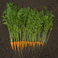 Cook with every part of the food. Turn your corn cob into broth, your broccoli stems into pesto, or your carrot greens into a salad. - Way To Waste Less Food